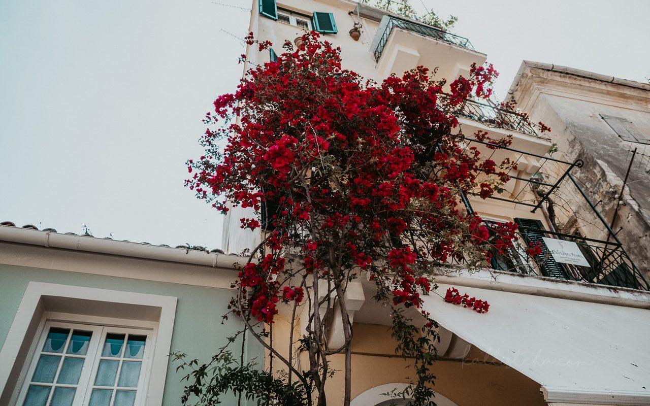 Escale à Corfou, petite ile authentique de Grèce. Au programme ? Photographies, récit et bonnes adresses hors des sentiers battus, me menant de la vieille ville de Corfou Town à Pontikonissi - Kallisteha, Voyages et vérités