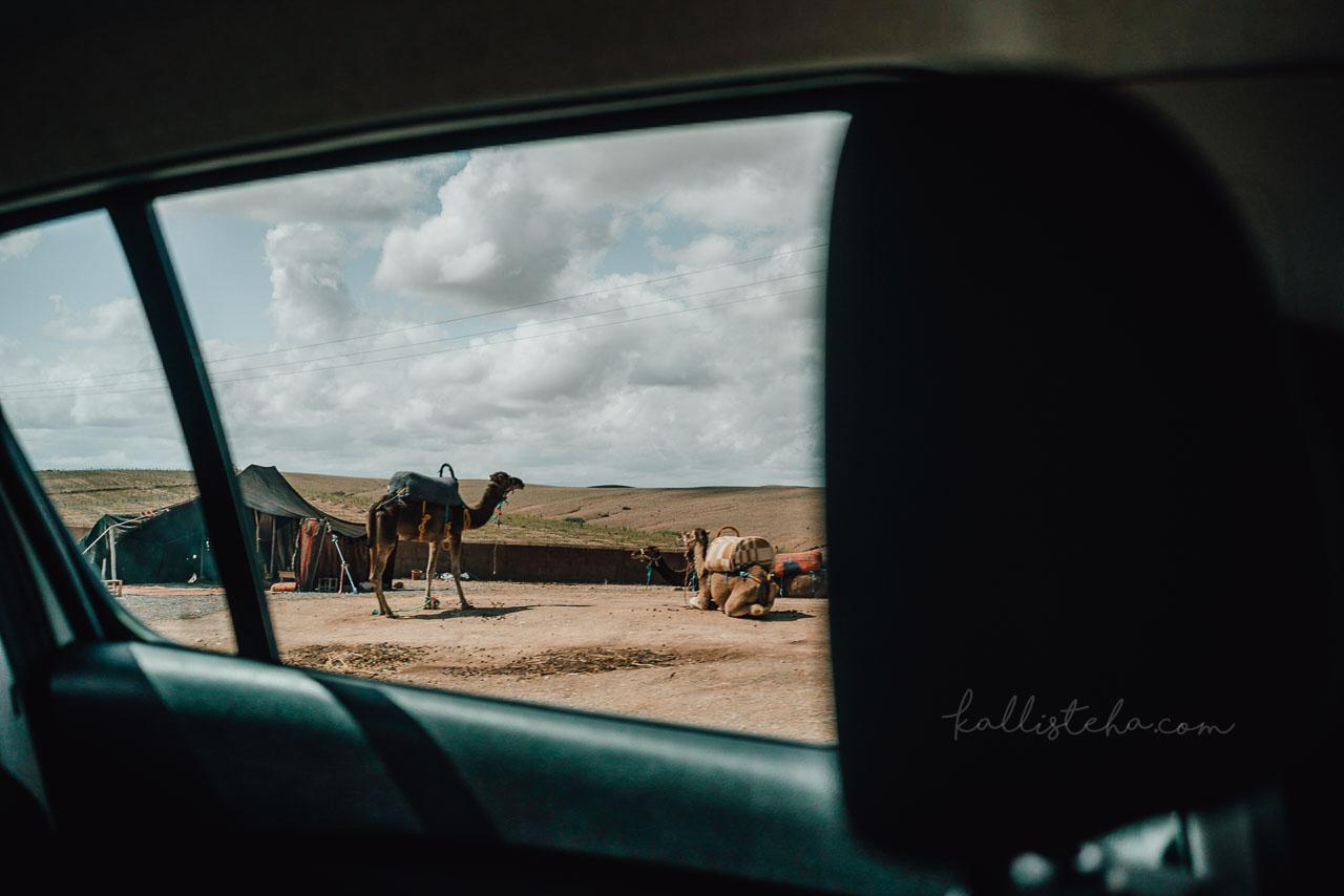 La vérité sur le Maroc, ou tout ce qu'on ne nous dit pas dans les guides de voyages : De l'exploitation humaine, à la maltraitance animale en passant par le tourisme de masse et bonnes adresses, finalement pas recommandables - Kallisteha, voyages et vérités - @the_kallisteha