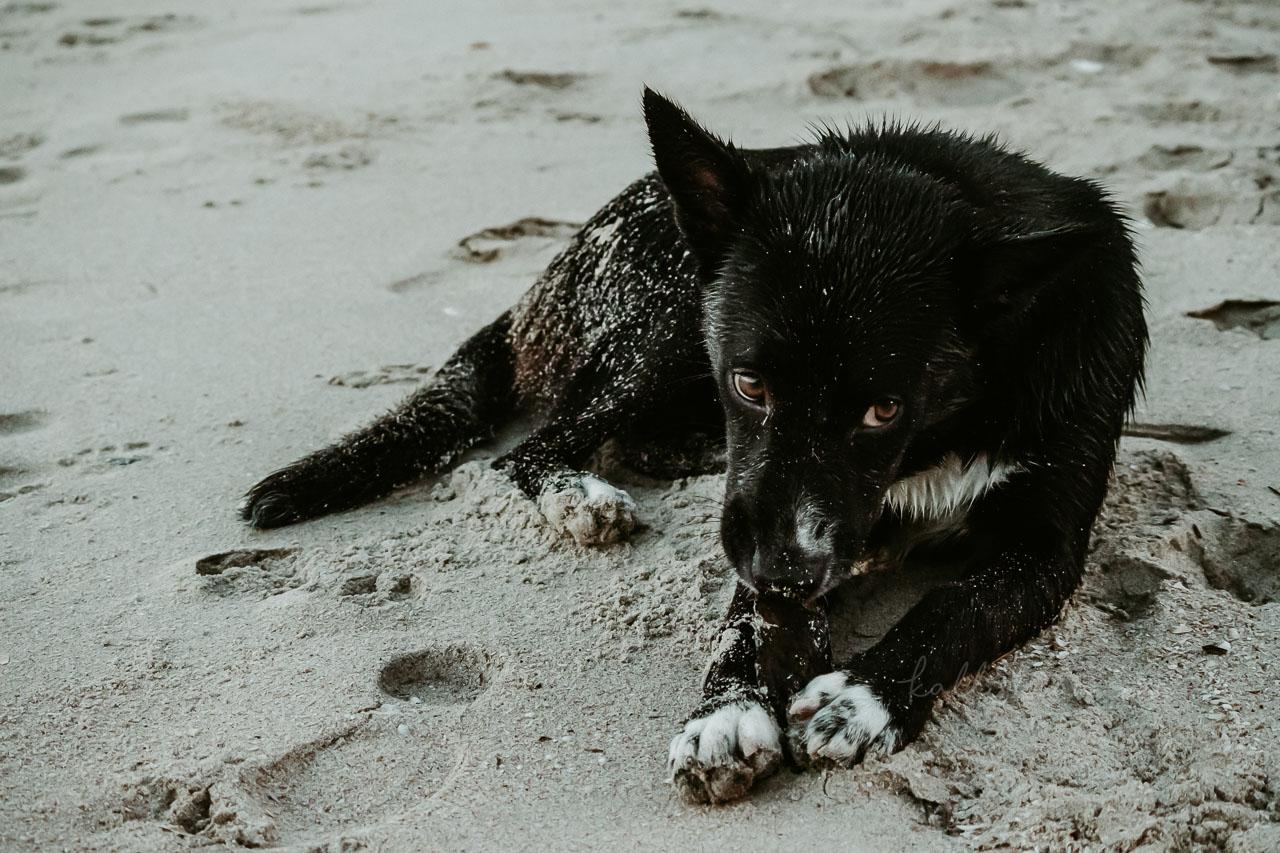 Comment photographier les animaux en voyage ? Techniques et réglages de prise de vue - Kallisteha, voyages et vérités - @the_kallisteha